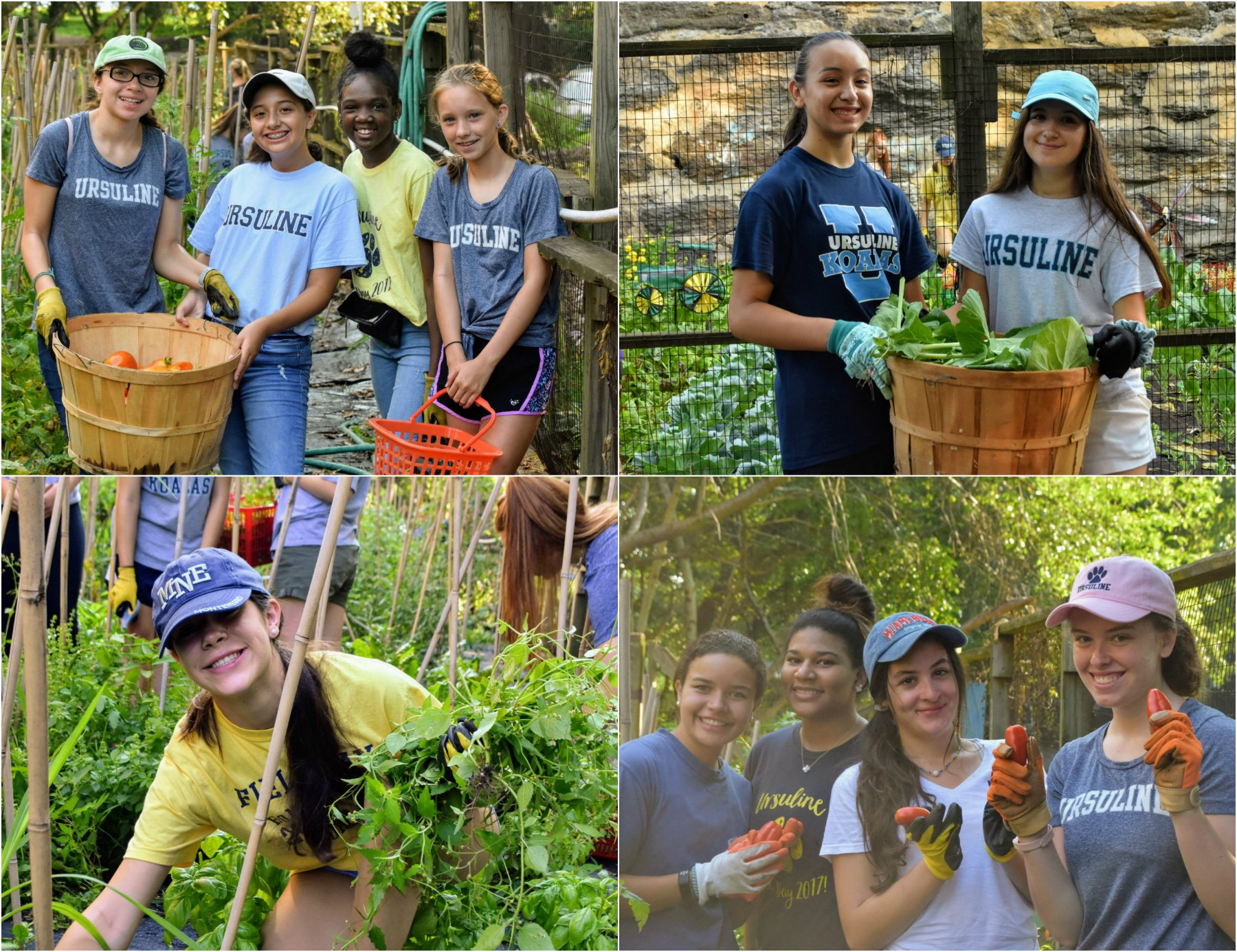 students assist in harvest